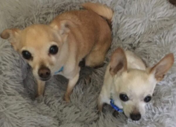 Hollis Cobb's Last Pets of the Week – Pogo and Paco Fincher